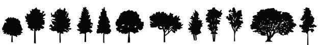 O Brasil é um dos países que abriga a maior floresta do mundo, por tanto, é possuidor também de inúmeras espécies de árvores típicas que se espalham por todo território brasileiro