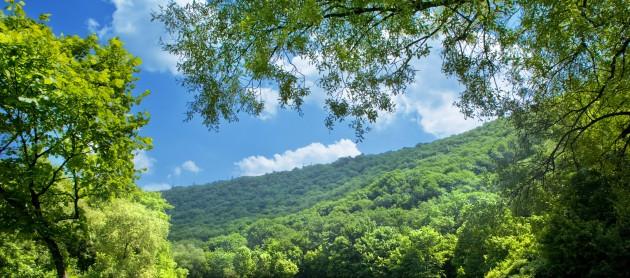 Importância das florestas como extração de madeiras, fotossíntese, proteção do solo, entre outras