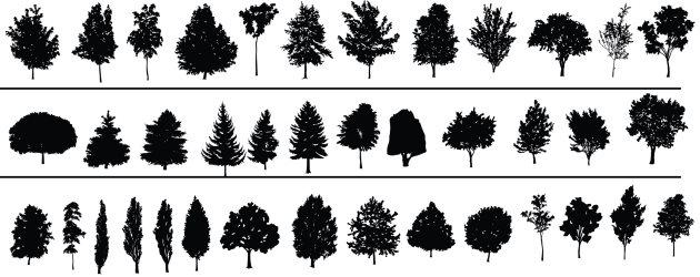 árvores plantas natureza