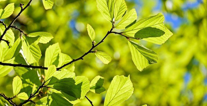 Folhas de plantas