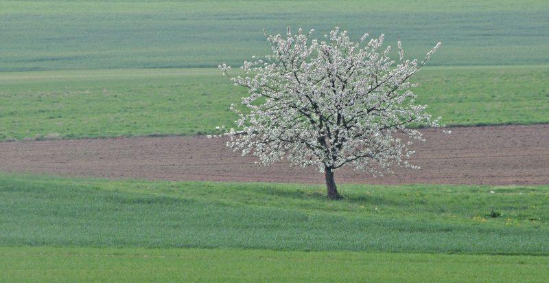 Loba Das Estepes: Tipos De Vegetação: Savana, Vegetação De Montanha E Deserto