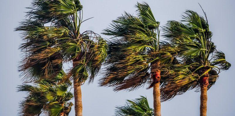Tipos de vento